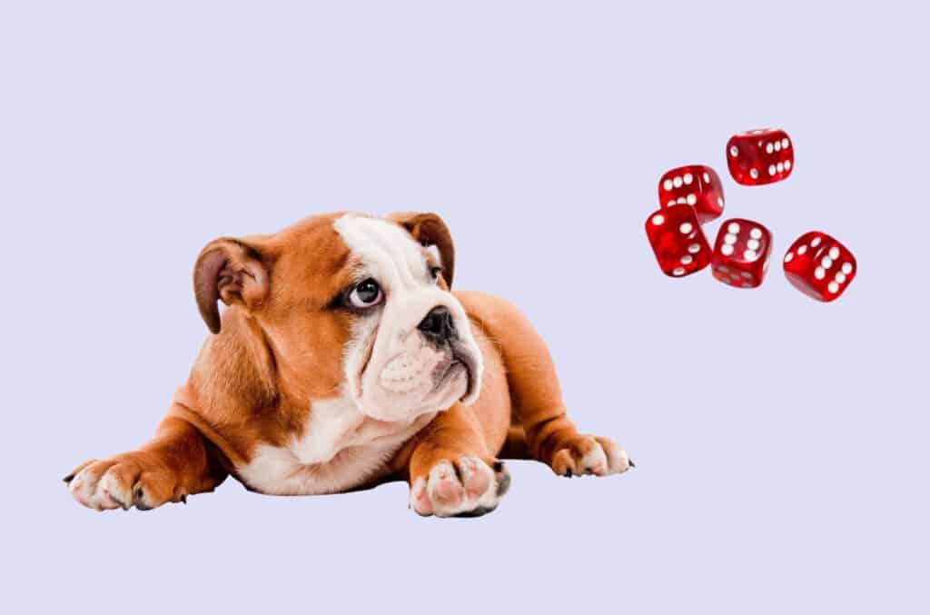 Hund på lys lilla bakgrunn som ser på røde terninger. Illustrerer best i test hundeforsikring