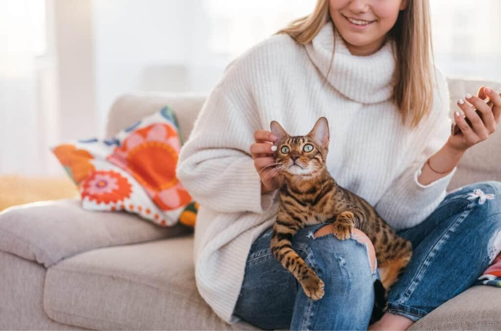 forsikring av katt og katteforsikring